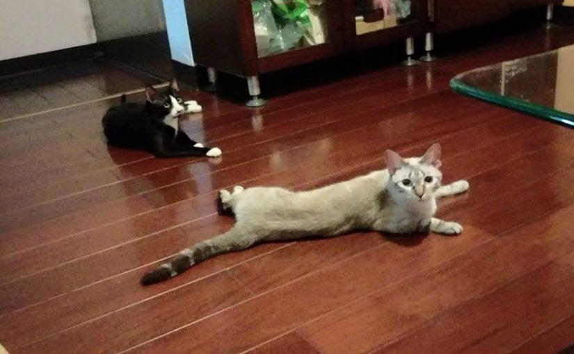 【筱嵐養貓用了小茜套房都不會臭臭了】(一)