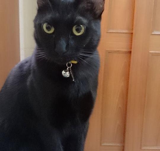 【終於找到貓尿救星!小茜豆腐砂!】