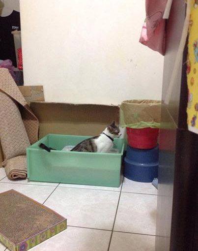 【使用分享】第一次認養貓咪就使用小茜豆腐砂
