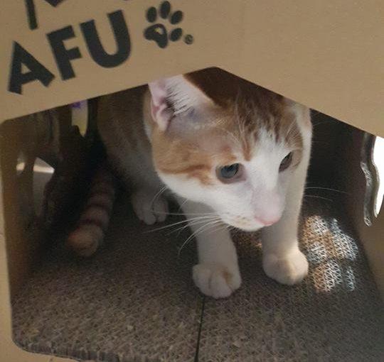 【養貓跪婦升級分享篇,貓沙困擾如何解決的呢?】