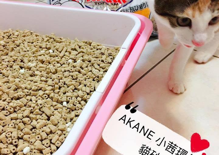 第一次使用「AKANE 小茜環保貓砂」