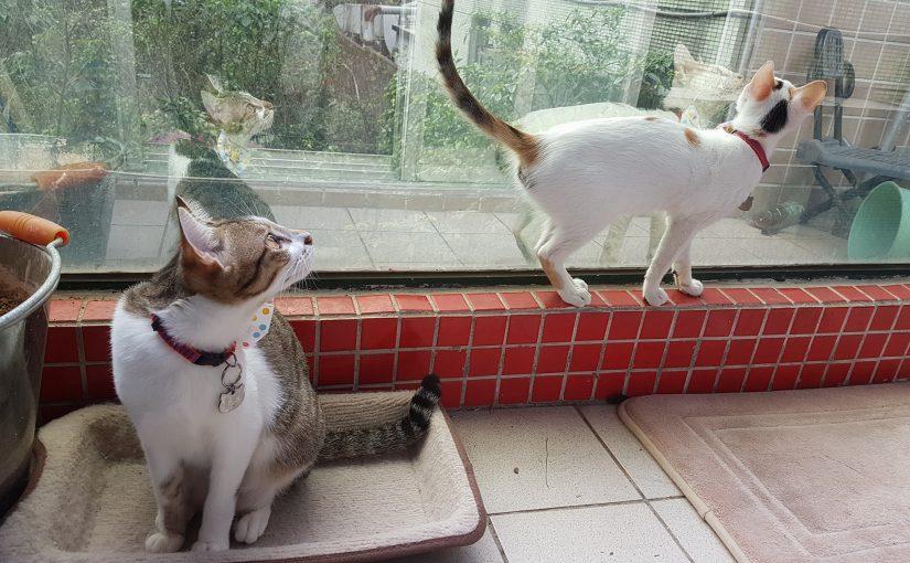 【有影片分享快來看!一起來了解小茜貓砂使用實況!!!!】