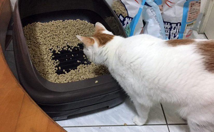 「小茜貓砂不同於一般貓砂, 讓您輕鬆愉快的體驗養貓新生活!」