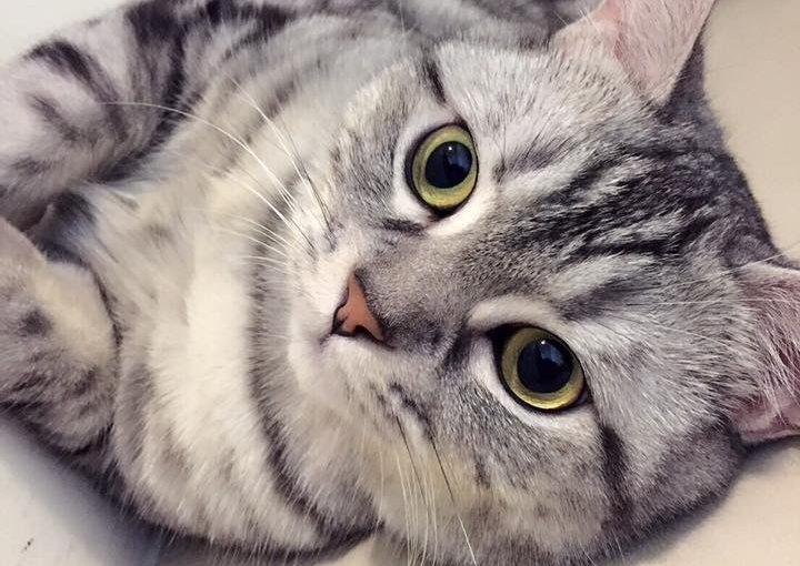 【好東西跟好貓奴分享】