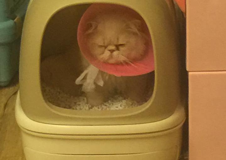 【不得不分享一下我用的貓砂-小茜豆腐砂】