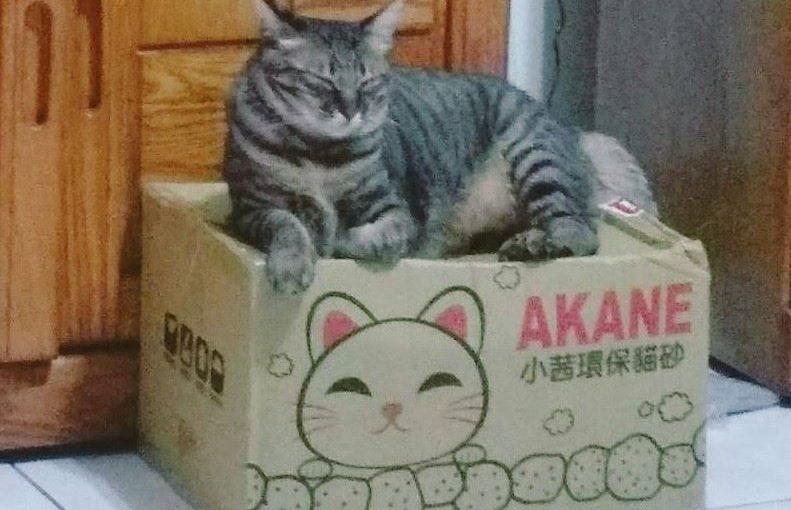 【貓玩礦砂變沙漠好困擾: 姸言使用小茜兩年真心推薦分享】