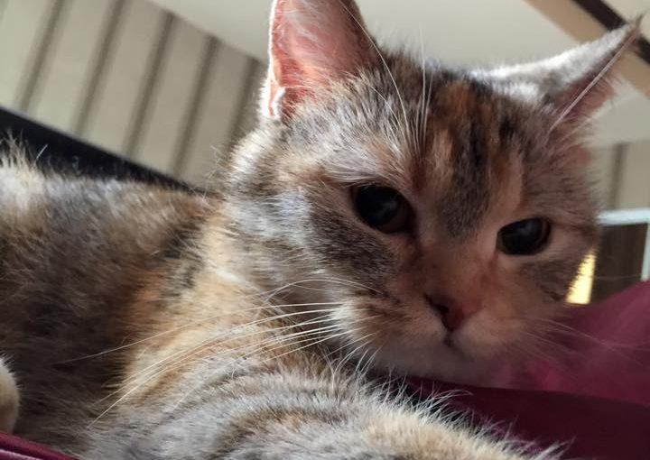 【曾經觀望了半年小茜豆腐砂,不認為會有這麼多優點的貓砂 可是…..】
