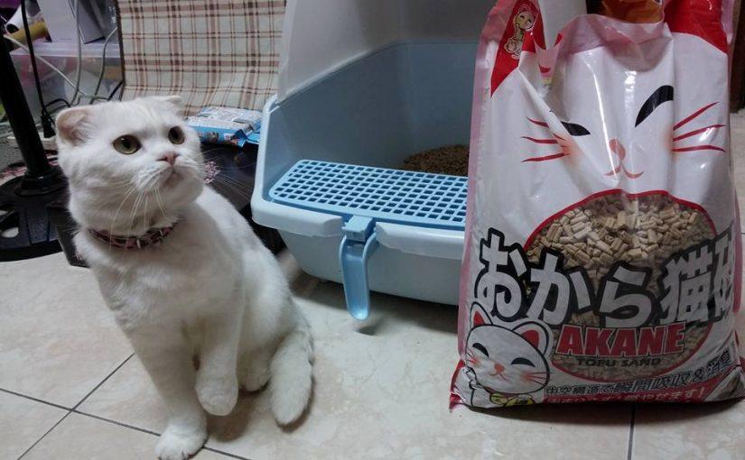 【貓奴們!用貓砂免忍尿騷味與粉塵,一個改變讓家人不再抱怨!】