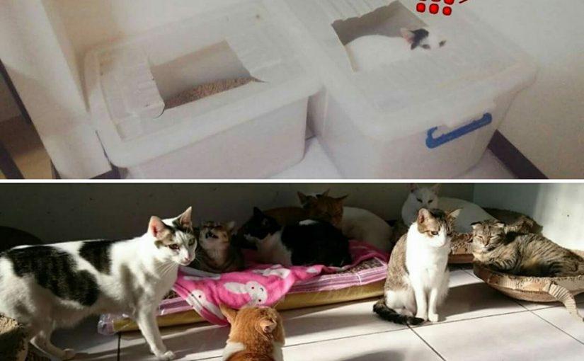 【30隻貓,使用小茜豆腐砂兩年經驗分享!養貓10年來用過最好用的貓砂】