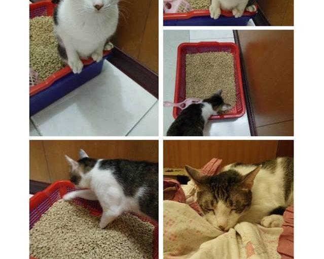 【還在找貓砂嗎?集結各種貓砂心得,在此分享快樂使用小茜貓砂感受!】