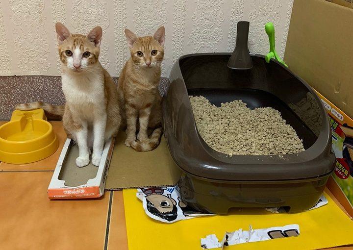 今天跟各位,分享一些養貓的心得!